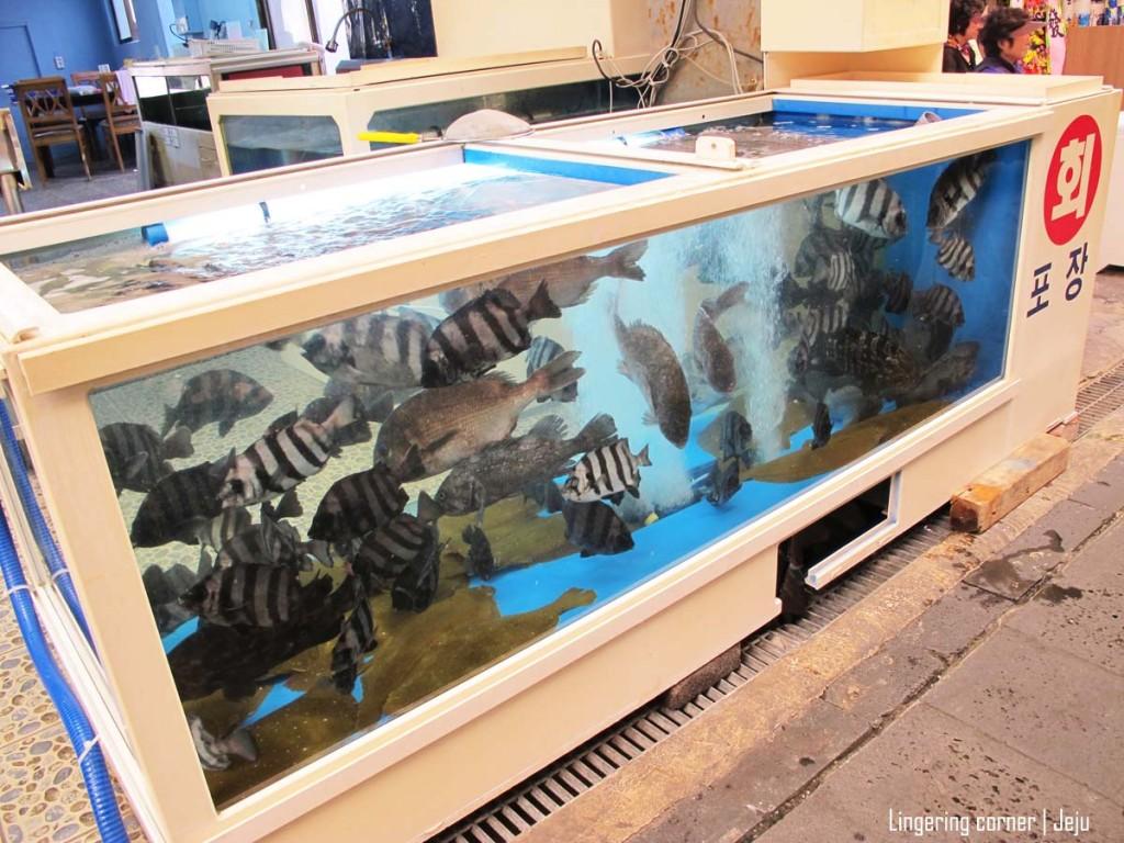 thought i saw those at some ... aquarium..?